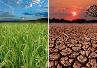 World Day to Combat Desertification and Drought Theme and Activities