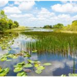 World Wetlands Day Themes