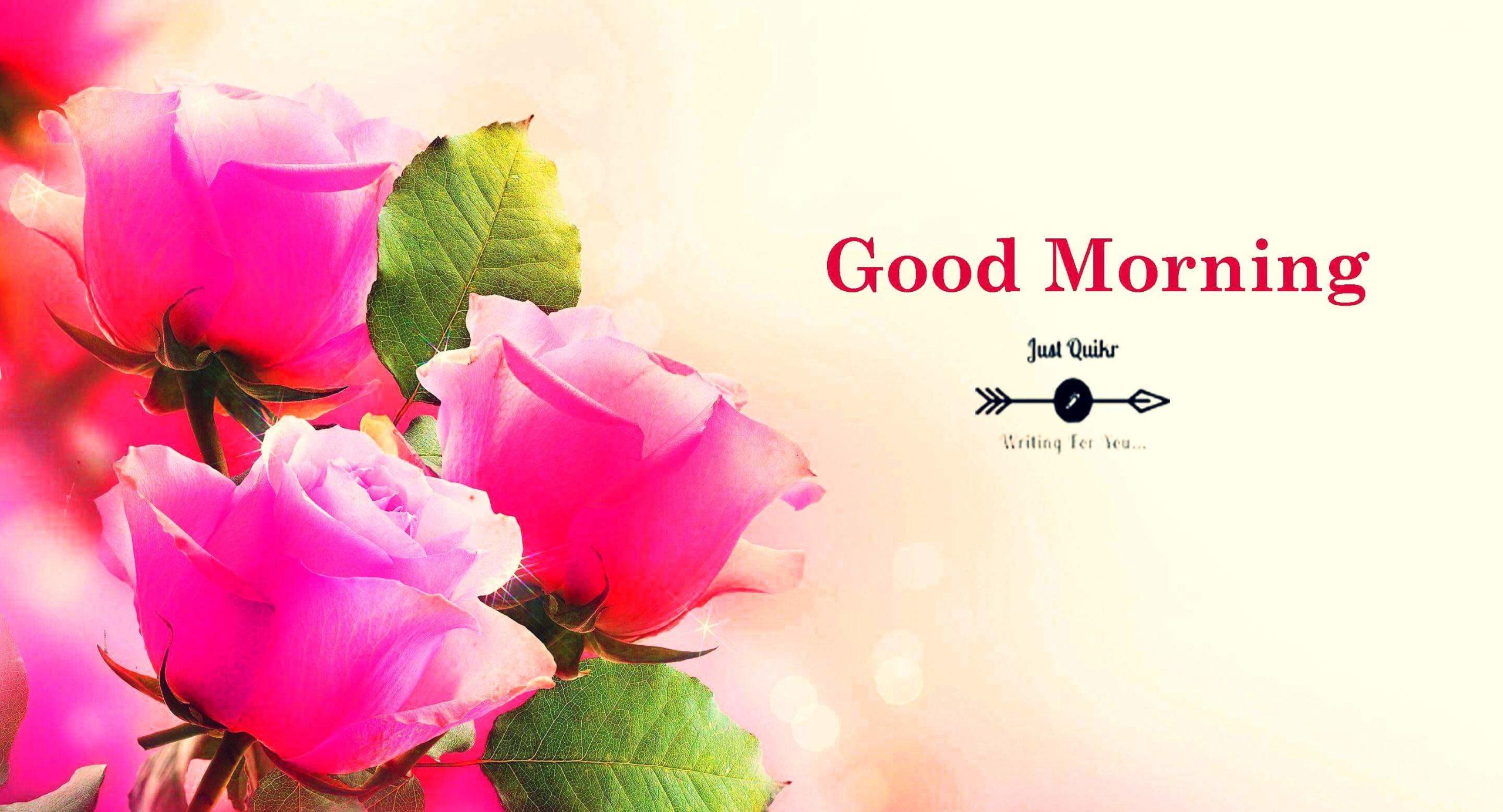 Good Morning Beautiful Flowers HD Pics Images Photo Wallpaper