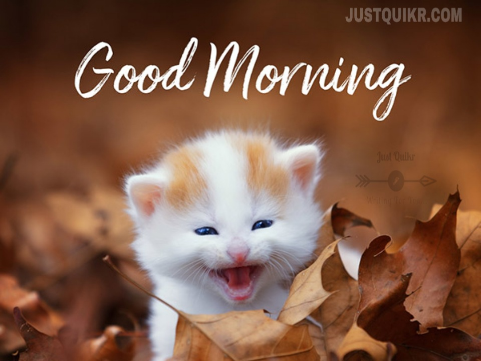 Good Morning Cute Quotes Messages Wishes Shayari SMS HD Pics Images