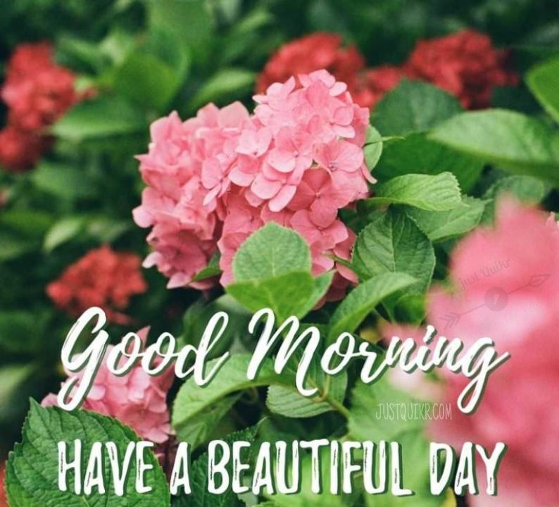 Good Morning hd Pics Images Download