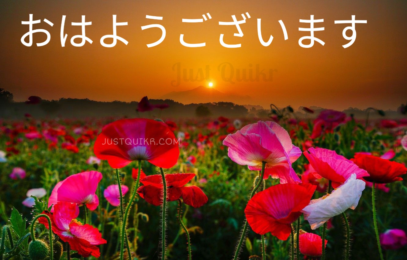 Good Morning Japanese Quotes Messages Wishes Shayari SMS HD Pics Images