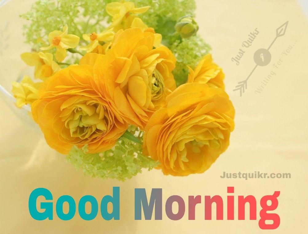 GoodMorning Yellow Rose Pics Images