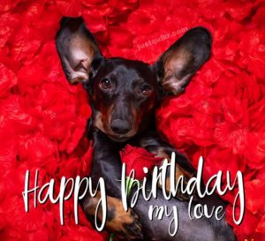 Happy Birthday Funny Wishes and Images for My Love
