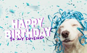 Happy Birthday Funny Wishes Memes and Images for Normal Friend