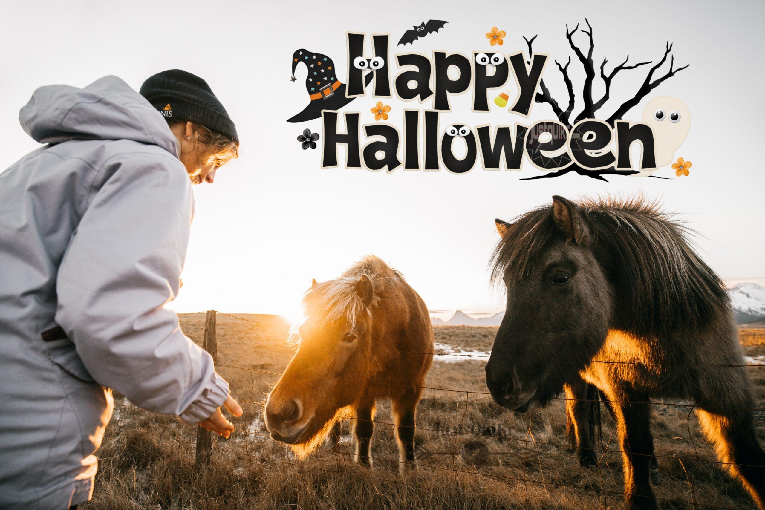 Halloween Day Fancy Dress Ideas for Horse