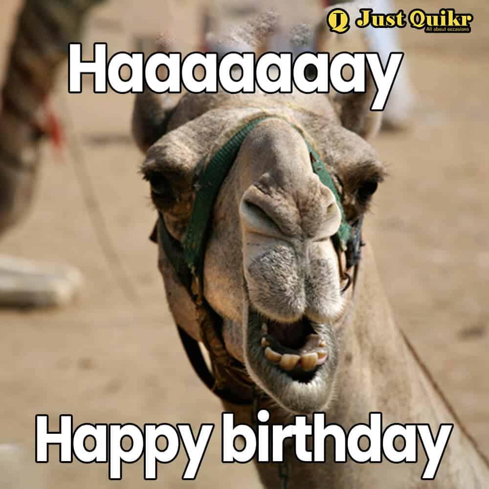 Happy Birthday Meme - 17